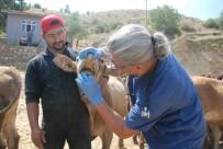 Dişi Kurbanlıklara Veteriner Kontrolü