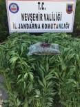 Nevşehir'de 114 Kök Hint Keneviri Ele Geçirildi