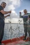 İNCİ KEFALİ - Van Gölü Balıkçıları İnci Kefali Avına Başladı
