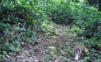 GÜMELI - Yaban Hayvanları Foto Kapanda Görüntülendi