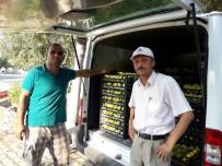BIRGI - Yaş İncirde Piyasa Hızlandı