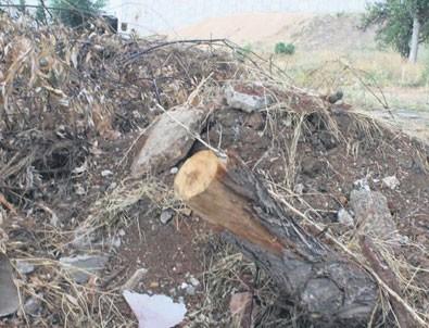 Ağaçları kestiler kamyonlarla moloz döktüler