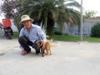 KıYAMET - Her Gün Fatih'ten Kasımpaşa'ya Yürüyerek Sokak Kedilerini Besliyor