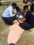 DÜĞÜN KONVOYU - Kazada Yaralananlara İlk Müdahale CHP'li Vekillerden Geldi