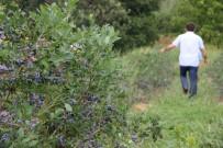 Kimsenin Ekmediği Meyvenin Kilosunu 25 Liradan Satıyor