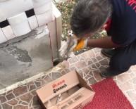 KıRıKKALE ÜNIVERSITESI - Sungurlu İtfaiyesi Yaralı Kediye Sahip Çıktı