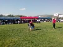PARA ÖDÜLÜ - Yayladağı Kültür Ve Aba Güreşi Festivali Başladı