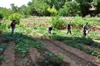 KİMYASAL MADDE - 200 Yıllık Geleneği Sürdüren Köylüler Hasta Olmuyor