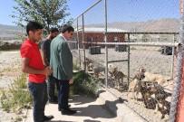 Sokak Hayvanları Düzenli Bir Şekilde Rehabilite Ediliyor