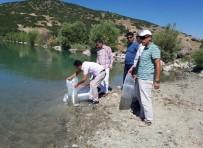 Tunceli'de Gölete 30 Bin Yavru Sazan Bırakıldı