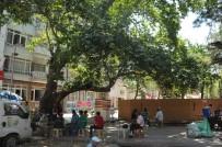 ASIRLIK ÇINAR - Asırlık Çınar Ağacını Heykeller Yükseltecek