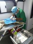 SOKAK KÖPEKLERİ - Çaldıran'da Sokak Hayvanlarını Kısırlaştırma Çalışması