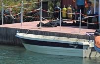DALYAN - Çeşme'de Bir Teknede 100 Paket Esrar Ele Geçirildi