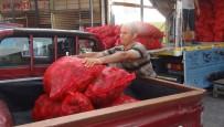 KIRMIZI BİBER - Çukurova'da Salçalık Biber Telaşı Başladı