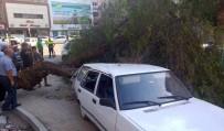 ADLİYE BİNASI - Devrilen Ağaç 2 Araca Hasar Verdi