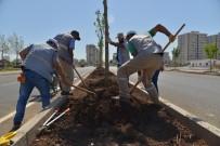 MUSA ANTER - Diyarbakır'da Kaldırım Ve Refüjler Ağaçlandırılıyor