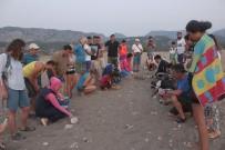 ULUPıNAR - Yavru Caretta Caretta'lar Denizle Buluştu