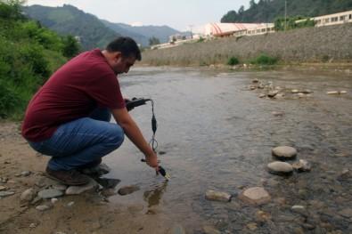 Giresun'da toplu balık ölümleri
