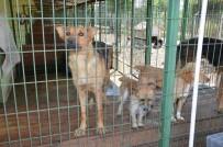 HAYVAN BARINAĞI - Hayvan Barınağı İçin Bakanların İşbirliği