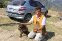 EĞİTİMLİ KÖPEK - Özel Köpek Arthur'un 200 Euro'luk Mantar Avı