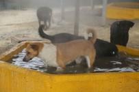 SOKAK HAYVANI - Sıcak Ve Nemden Bunalan Hayvanlara Buharlı Serinlik