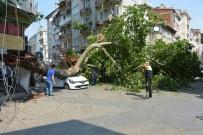 ÇINAR AĞACI - Tarihi Çınar Otomobilin Üzerine Devrildi Açıklaması 1 Yaralı