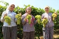 MURAT BAYBATUR - Türk Üzümü Bir Yıl Aradan Sonra Rusya Pazarında