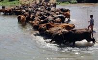 AGİT - Mandalar Suda Hem Serinliyor Hem De Süt Verimleri Artıyor
