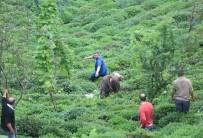 DURSUN YıLMAZ - Rize'de 800 Kiloluk Boğa Önüne Geleni Kovaladı