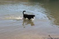 MURAT AYDıN - Bu Köpek Balık Yakalıyor