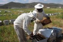 HAVA SICAKLIKLARI - Erzurum'da Bal Üretiminde Yüzde 40 Azalma Yaşandı