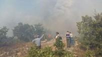 BALLıCA - Kütahya Domaniç'te Orman Yangını
