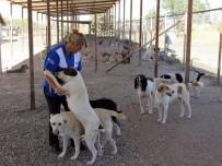 REHABİLİTASYON MERKEZİ - Pet Diye Alınıp, Pat Diye Atıldılar