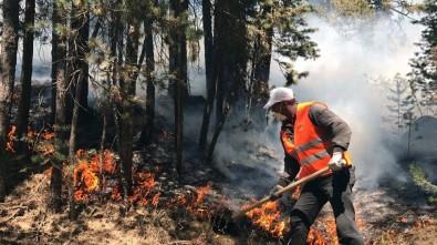 Sarıkamış ormanları alev alev yanıyor
