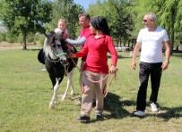 HIPODROM - Elazığ'da At Sevgisi, Ücretsiz At Binme İle Aşılanıyor