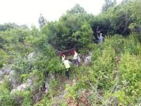 EYLEM PLANI - Kastamonu Ve Sinop'ta, Defne Üretiminde Hedefler Aştı