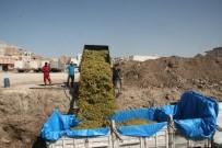 ÖZELLEŞTIRME - Kilis'te Üzüm Hasadı Sürüyor