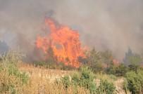Küçük Kızların Dikkati Büyük Orman Yangını Önledi