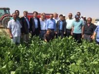 HASANLAR - Milletvekili Açıkgöz Pancar Hasadı Yapan Çiftçileri Yalnız Bırakmadı