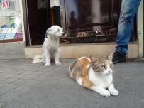 KIRAÇ - Taksim'de Kedi Ve Köpeğin Dostluğu Görenleri Şaşırttı