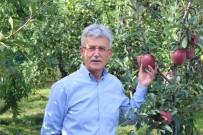 TARIM İLACI - 25. Yeşil İhsaniye Elma Festivali Başladı