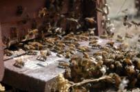 Arıların Saldırısına Uğrayan Şahıs Hayatını Kaybetti