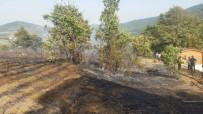 DILRUBA - Bursa'da 3 Hektarlık Ormanlık Alan Yandı