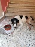 BEYLERBEYI - Kayıp Köpek Çıtır'ın Ölümü Mahalle Sakinlerini Hüzne Boğdu