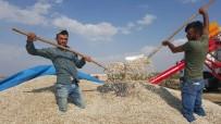 KURUYEMİŞ - Kayseri Şeker Çerezlik Ayçiçeği Sektöründe De Lider Olacak