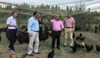 Müdür Yolcu, Genç Çiftçi İşletmelerini İnceledi