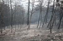 YANGIN HELİKOPTERİ - Sakarya'da Orman Yangını Kısmen Kontrol Altına Alındı