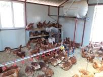 İBRAHIM DEMIR - Samsat'ta Genç Çiftçi Desteği İle Bayanlar Üretim Yapıyor