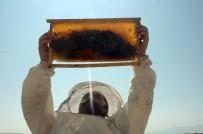 TANDOĞAN - Son 10 yılın en bereketli bal hasadı