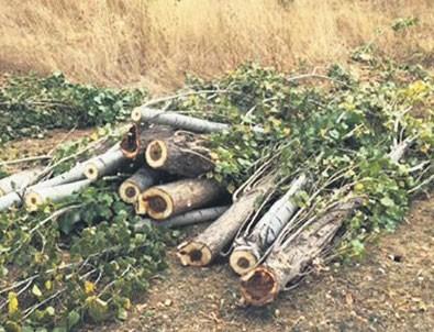 Sözde ağaç severlerden 5 katliama tepki sıfır